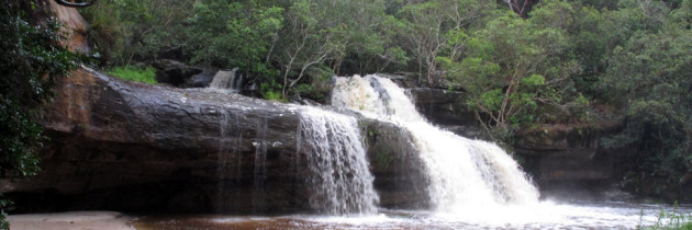 Mullet Creek Bushcare Group meeting at the Irrawong Waterfall