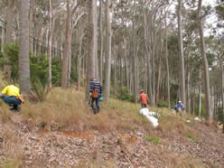 Rocky Point Community Bushcare